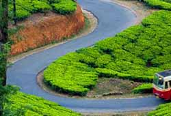 Coorg/Ooty Packages